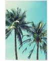 Affiche Palm Trees 2