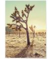 Affiche Nature Desert 1
