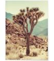 Affiche Nature Desert 3