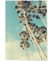 Poster Palm Trees 7