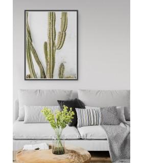 Affiche nature Cactus