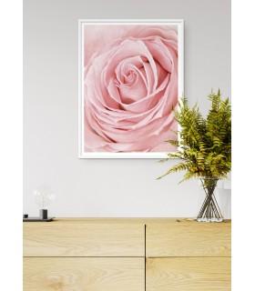Affiche Pink Rose Flower
