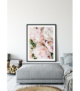 Affiche Nature Pivoine Rose
