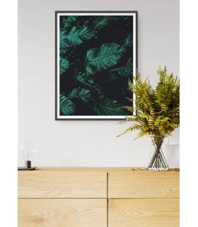 Affiche Nature feuille de palmier de banane