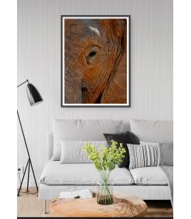 Poster Élephant