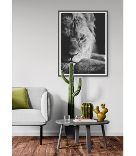Poster Lion noir et blanc 3