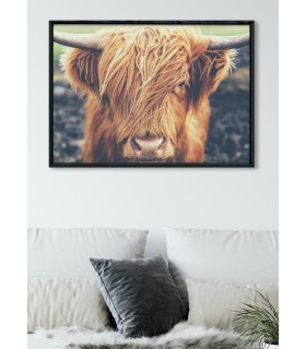 Poster Highland Cow
