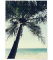 Poster nature Palmier plage