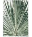 Affiche Nature Feuille de palmier