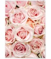 Affiche Nature Roses