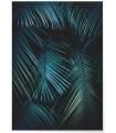Affiche Feuilles de palmier tropical verte