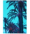 Affiche Palm Trees